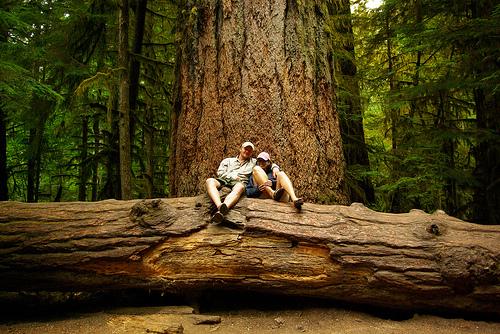 árbol gigante