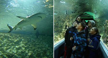 acuario-de-bergen-1