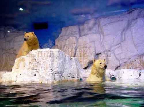 El Acuario Polar mas grande del mundo, en China