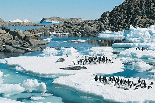 Pingüinos, Antártida, Chile