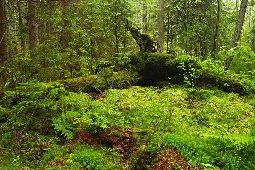 Visita al Parque Nacional de Bialowieski
