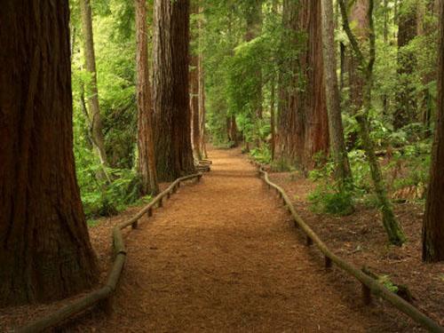 Bosque de Rotorua