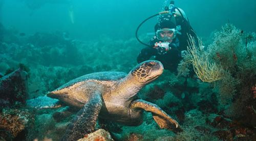 buceo en galapagos