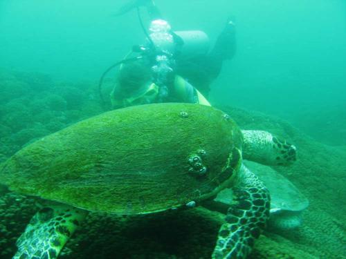 Islas Al-Dimaniyat, el mejor buceo en Omán
