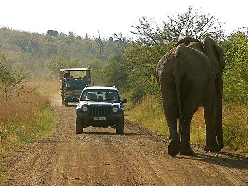 Caminar con elefantes, en Sudáfrica