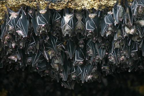 Las cuevas de murciéalgos de Tingkasan, en Filipinas
