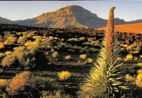 Tenerife, ideal para practicar senderismo