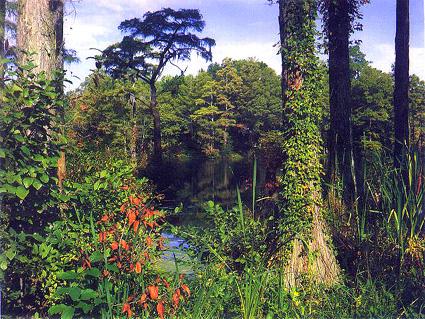 parque nacional everglades fica - photo #33