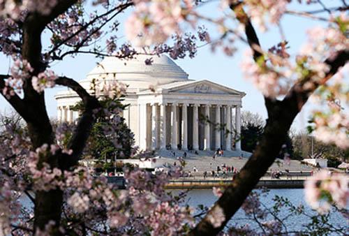 El Festival del Cerezo en Flor en Washington