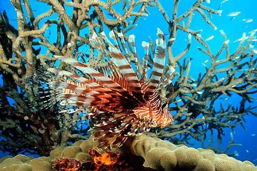 Fondo marino en Fiji