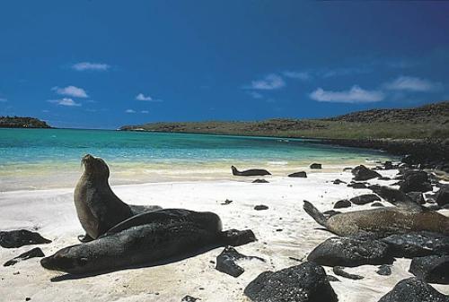Islas Galápagos, leones marinos, playa