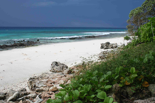 Isla Aride, una reserva natural en las Seychelles