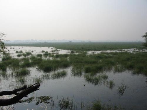 El Parque Nacional Keoladeo, en la India