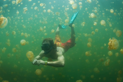 lago-de-medusas-en-palau