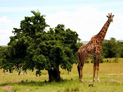 Ecoturismo en Laikipia, Kenia