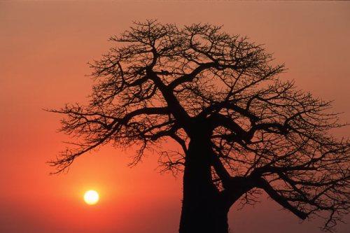 A la sombra del Baobab, de Xavier Moret