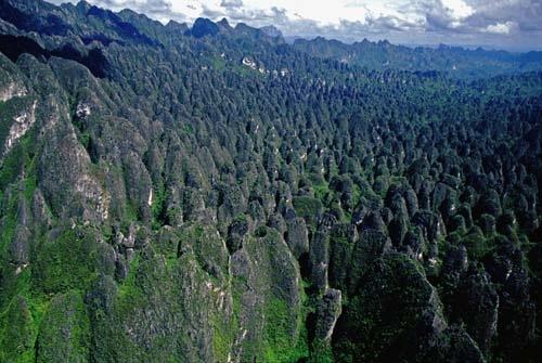 Bosque de roca de Mangkalihat