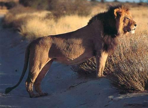El Desierto de Kalahari, en Namibia