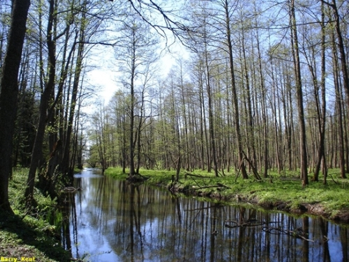 Bosque de Bialowieza