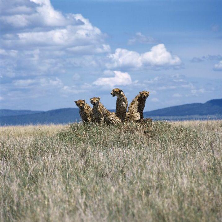 El Parque Nacional Serengueti, en Tanzania
