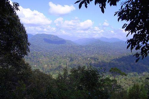 El Parque Nacional Taman Negara, en Malasia