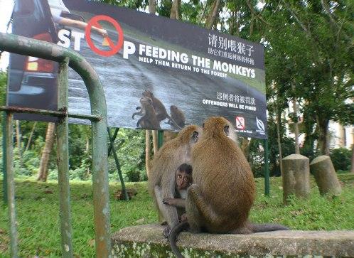 La Reserva Natural de Bukit Timah, en Singapur