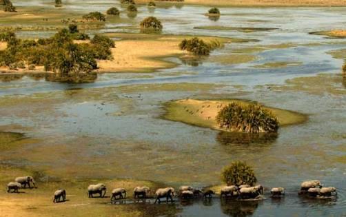 Delta del rio Okavango