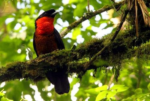 Visita al Parque Natural Otún Quimbaya