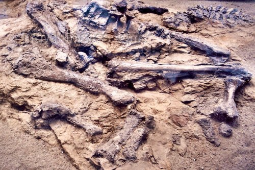 Lista del Patrimonio Mundial. - Página 2 Patr_canada_dinosaurios