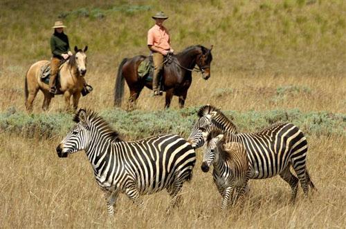Safaris en Malaui, belleza salvaje