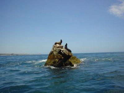 Leones marinos en islote emergido del mar