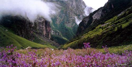 Valle de las Flores en India